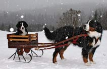 Metal Cart Sleigh Runners