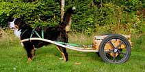 Deluxe Mid-Size Dog Cart with Laminated Bent Wood Shafts