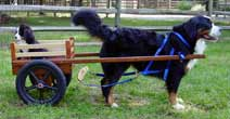 Deluxe Small Competition Dog Cart: Fiberglass Wheels