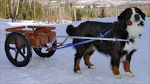 Deluxe Mid-Size Dog Carts