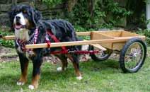 Small Competition Dog Cart