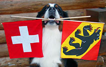 Swiss & Bernese Flags