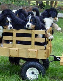 Puppies along for the ride
